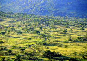 Afrykański krajobraz