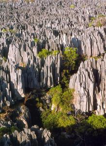 Tsingy de Bemaraha fot. wikipedia