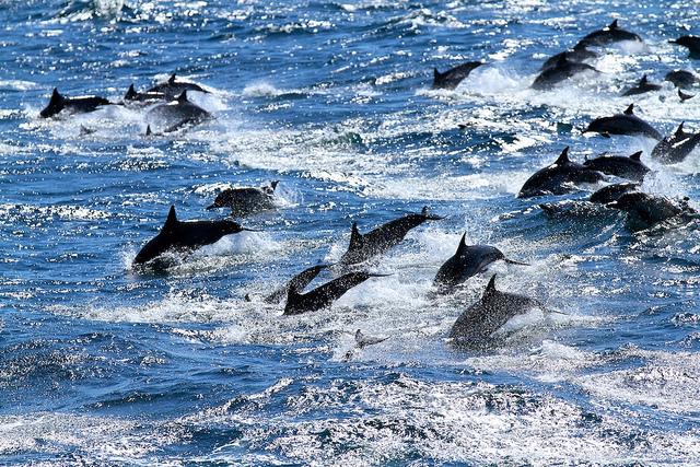 Przyjacielski jak delfin?