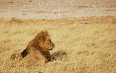 Namibia i Wodospady Wiktorii